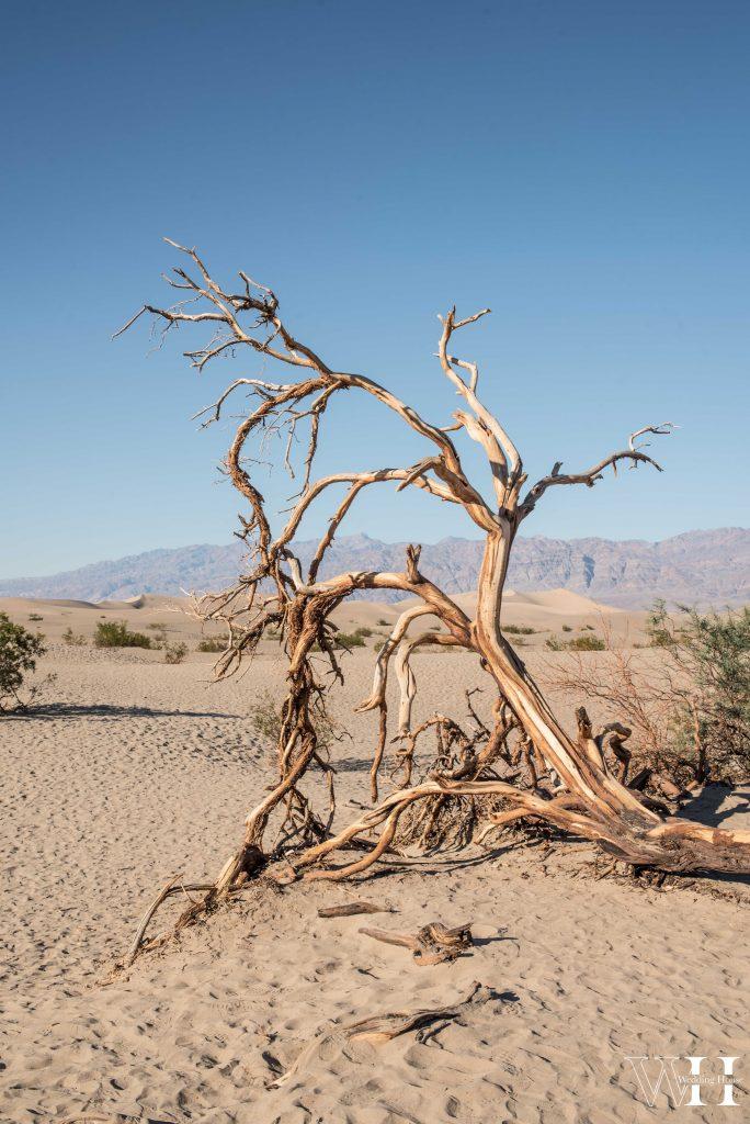 Death Valley - Las Vegas-17
